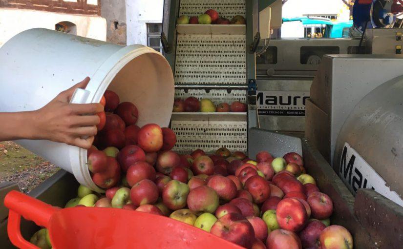 Apfel-Presstag auf dem Hof der Gräfenmühle