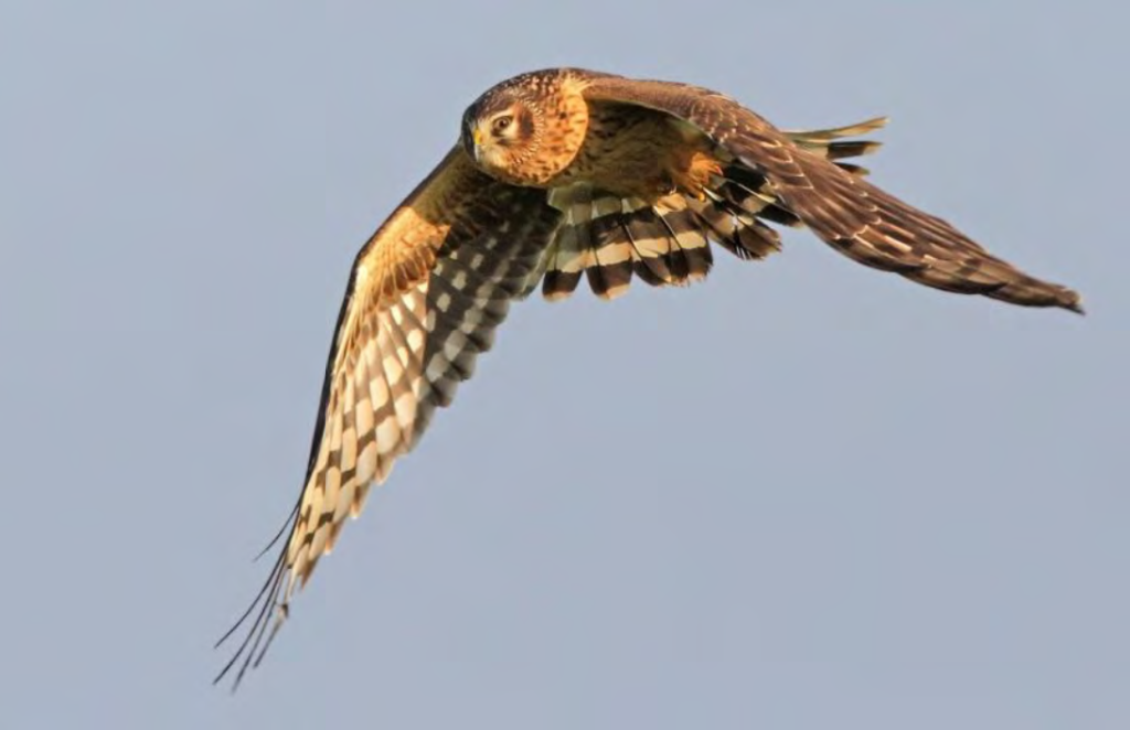 Ornithologischer Jahresbericht 2019