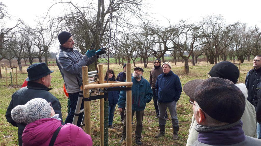 Praxisseminar Obstbaumschnitt