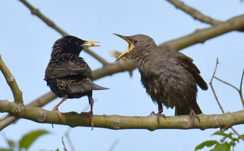 Ornithologischer Jahresbericht 2018 Ornithol