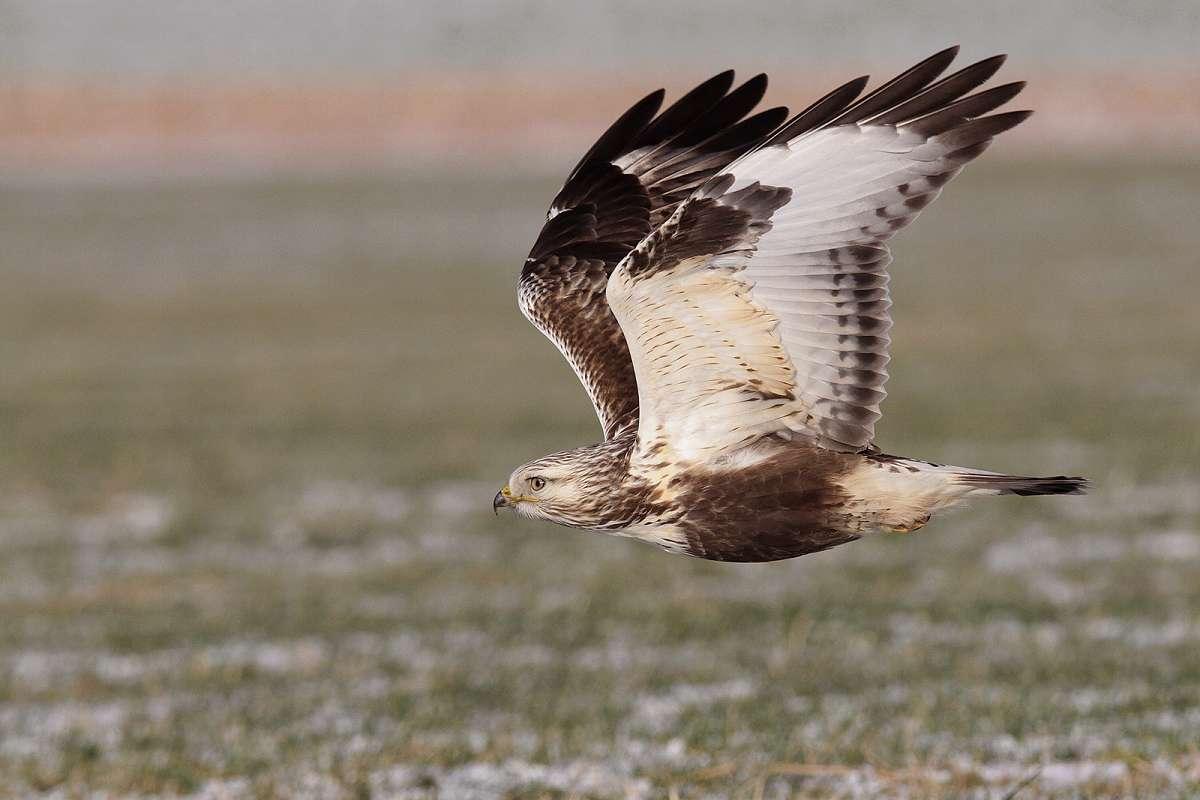 NaturTour: Ornithologische Wanderung